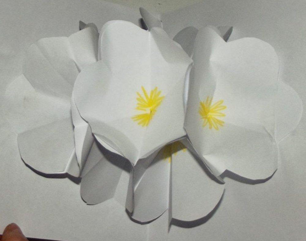laurka pełna kwiatów