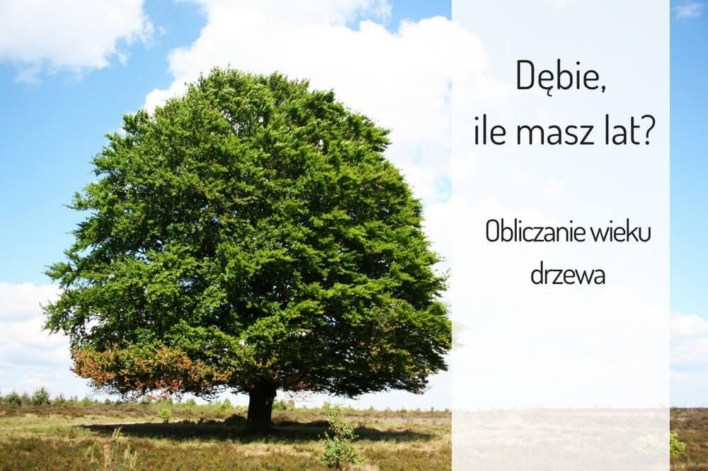 dębie ile masz lat? obliczanie wieku drzewa