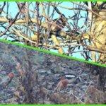 Ptaki zimą w ogrodzie czyli ptasia uczta na orzechu
