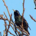 Co ma wspólnego ptaków śpiew z matematyką?