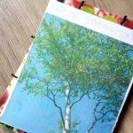 Brzoza brodawkowata – lapbook edukacyjny cz 1