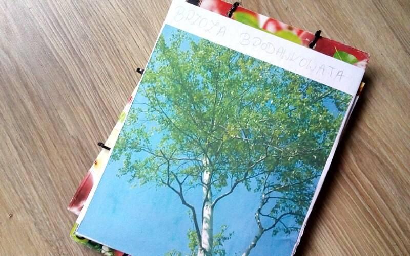 Brzoza brodawkowata - lapbook edukacyjny