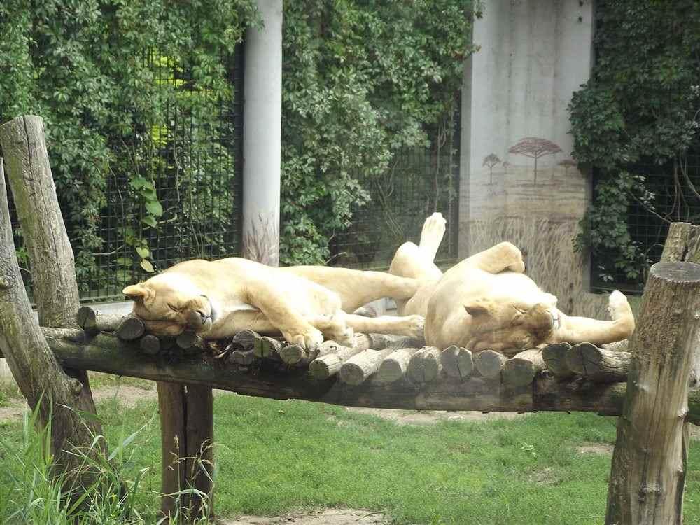 zoo Płock