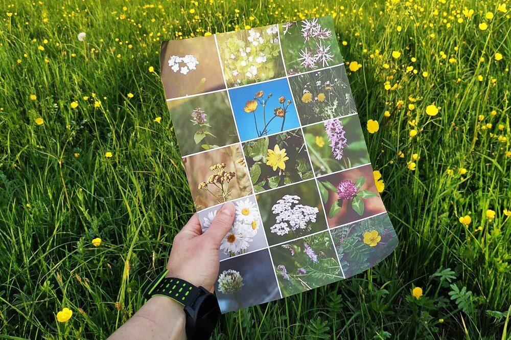 kwiaty na łące darmowy pdf
